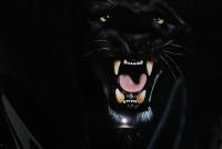 1000 CBR  Black Panther